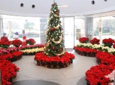 公園館のクリスマスツリー