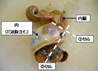 つぶ 貝 唾液腺