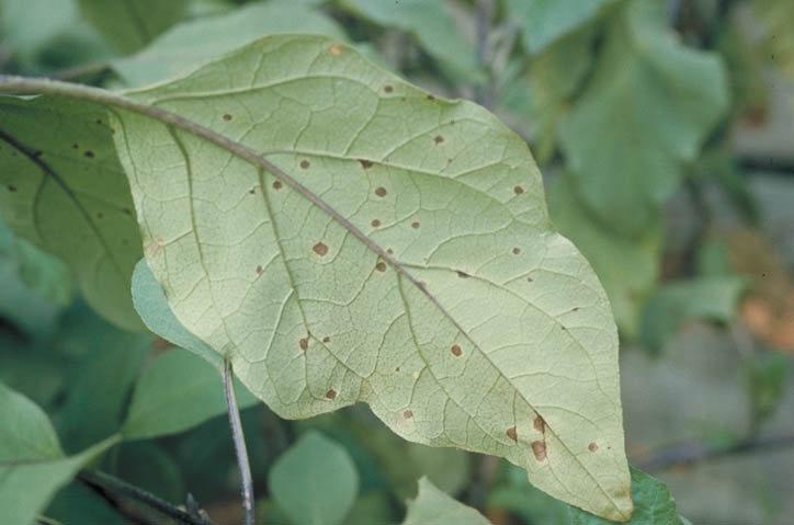 の 病気 茄子 ナスの病気対策と害虫対策