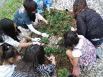 花の植栽4